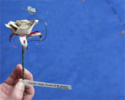 Mystery paper sculptures found again at Edinburgh International Book Festival